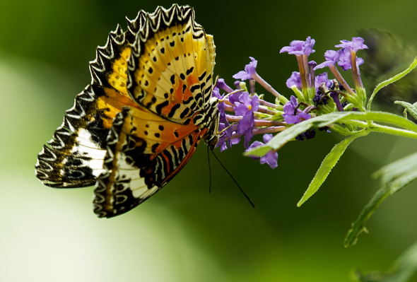 Colorful Butterfly on Purple Flower